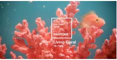 Pantone 2019最新代表色登場!「珊瑚橙Living Coral」引領來年流行趨勢!